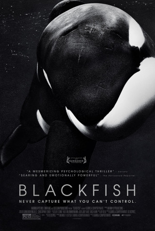"Blackfish Causes a ""Whale"" of a Problem for Seaworld"